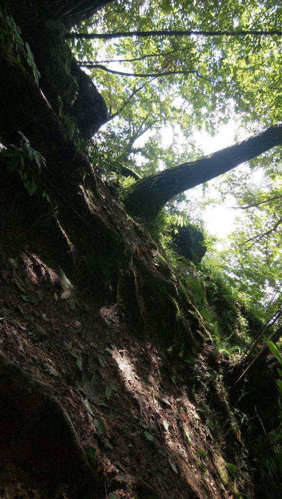 ワーケーション体験 能勢の森